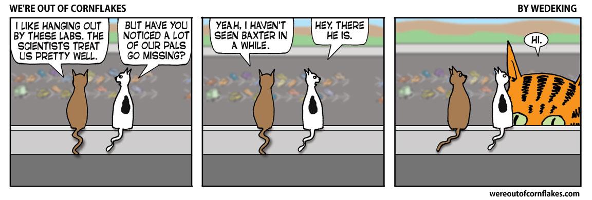 Cats love hanging around the lab