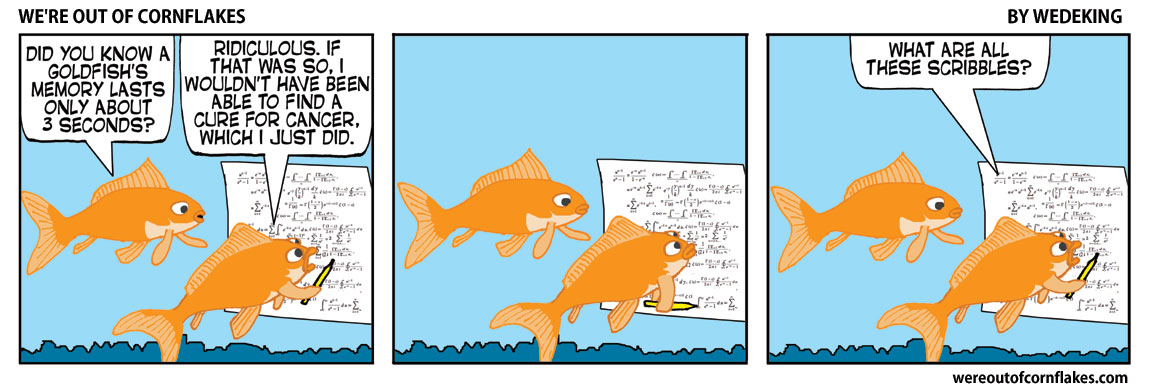 Goldfish have short memories